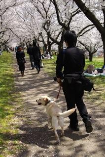桜並木のへろへろ氏とエルザ