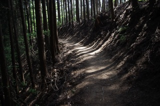 木々と山道