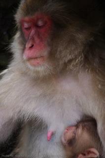 猿の母と子の風景(2)