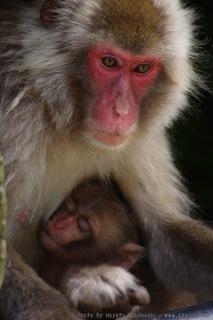 猿の母と子の風景(4)