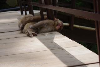寝ている小猿がふとこっちを見た